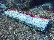 去年発見された碇石。文化財レベル級です!
